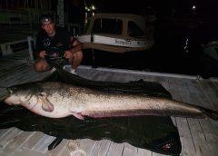Pescuit la somn 19.08.2017 - un urias de 2.67m la Dunare